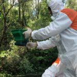 Megkezdték a biológiai szúnyoggyérítést Komáromban